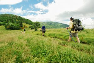 Roan Highlands Backpacking